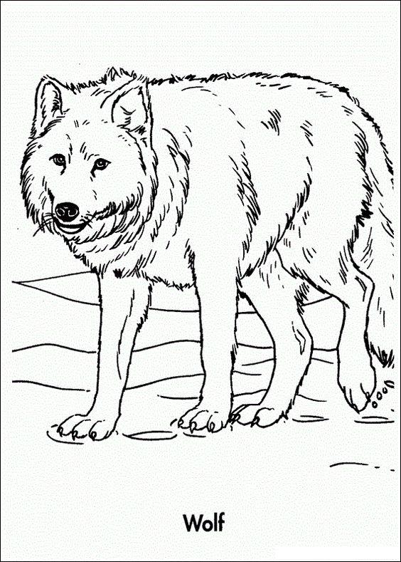 Free Printable Wolf Coloring Pages For Kids Wolf Colors Animal Coloring Pages Farm Animal Coloring Pages