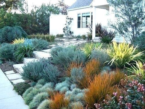 33++ Drought tolerant backyard landscaping ideas ideas in 2021