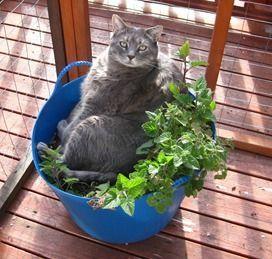 Cat Enclosures Seattle - Catio Spaces: BENEFITS OF A CAT ENCLOSURE #catnipbenefits