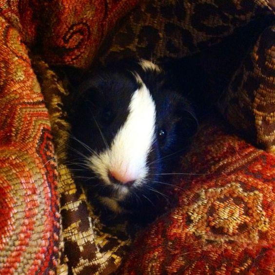 Precious Pippy Pig