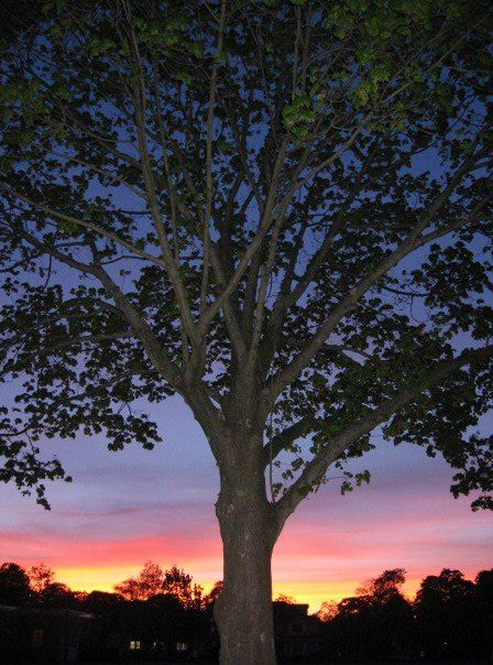 Flashy Tree.