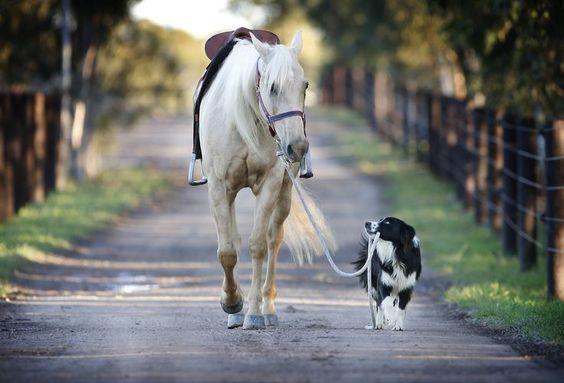 #pferd #hund                                                                                                                                                                                 Mehr