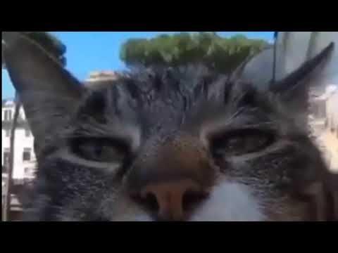 Best Google Maps Memes V1 Youtube Earth Memes Cat Gif Memes