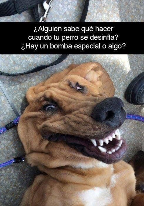 Matakhuri Compartio Una Imagen En Memes Divertidos Sobre Perros Memes De Animales Divertidos Frases Divertidas Sobre Perros