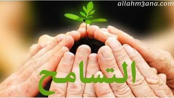 التسامح من أجمل الصفات حديث عن التسامح الله معنا Allahm3ana Live Lokai Bracelet Lokai Bracelet Bracelets