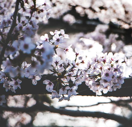 Gardening Japan 400 20200501131404 53 Garden Planning Best Garden Layout Landscaping Gardening Seeds Gardeni Garden Quiz Plant Nursery Rooftop Garden