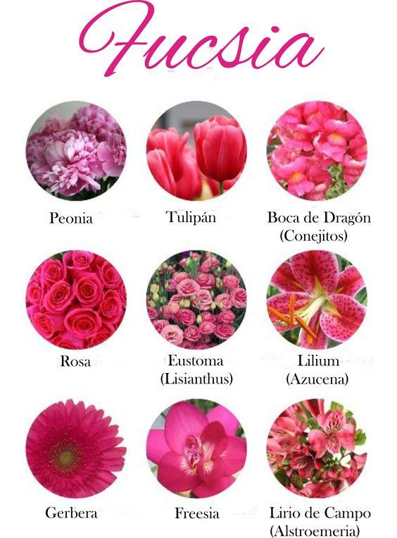 Nomi Fiori Rosa.Fiori Per Colore Il Rosa E Il Fucsia Organizzazione Matrimonio