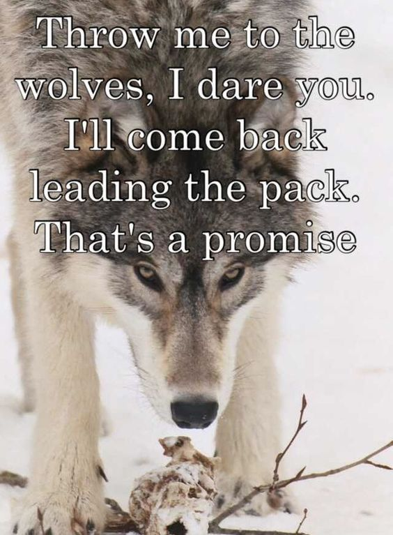 Inspirational Strength Wolf Quotes : inspirational, strength, quotes, Motivation, #motivational, #inspire, #inspirational, #youarethestorm, #storm, Strength, #wolf, #quote, #quotes, #sayings, Quotes,, Werewolf, Quotes