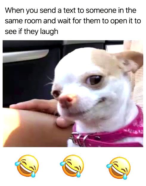 Hahahaha Super Dog Memes That Are Relatable Funny Adopt Dog Meme Dog Memes Funny Dog Memes Funny Dogs