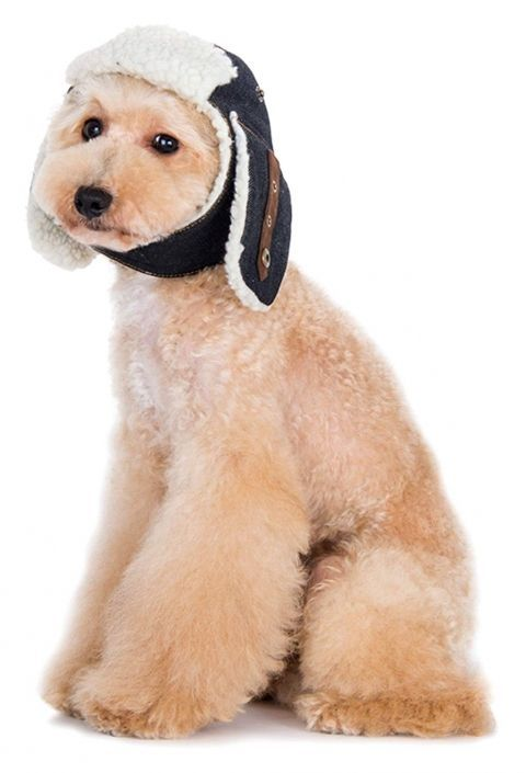 Winter Hats For Dogs And Winter Coats For Dogs Dog Coats Dog Hiking Gear Dog Needs