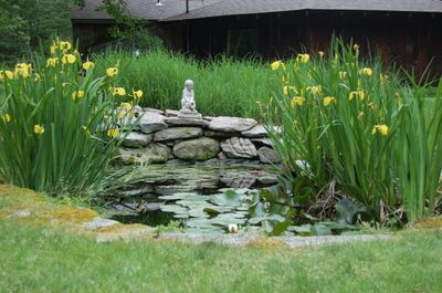 Ornamental grasses etc backyard pinterest fish for Ornamental fish garden ponds