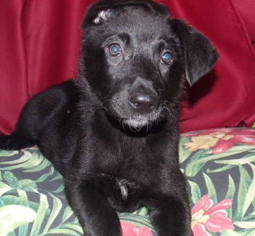 Bertha In 2020 Puppy Adoption Puppies For Sale Puppies Near Me