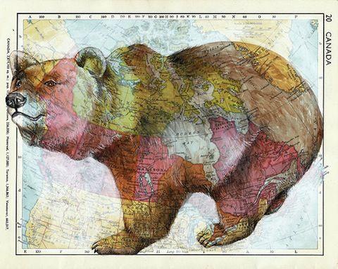 Bear on map