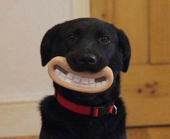 a chew toy that's worth buying a dog for
