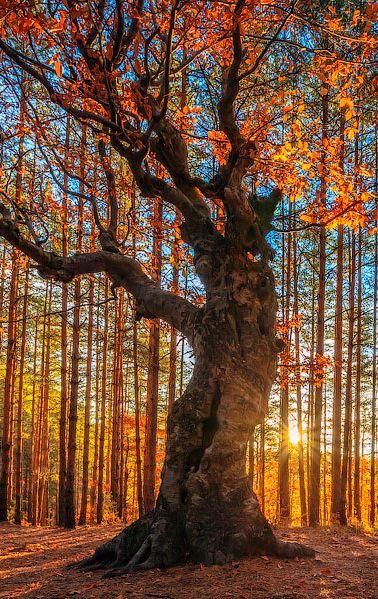 Naturaleza en su mínima expresión... Esto es hermoso y verdaderamente asombroso! toda una obra de arte de Dios