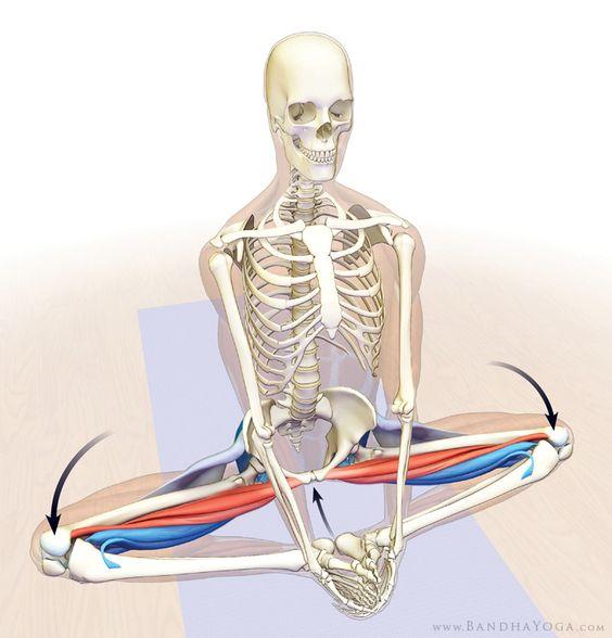 Hip opener: