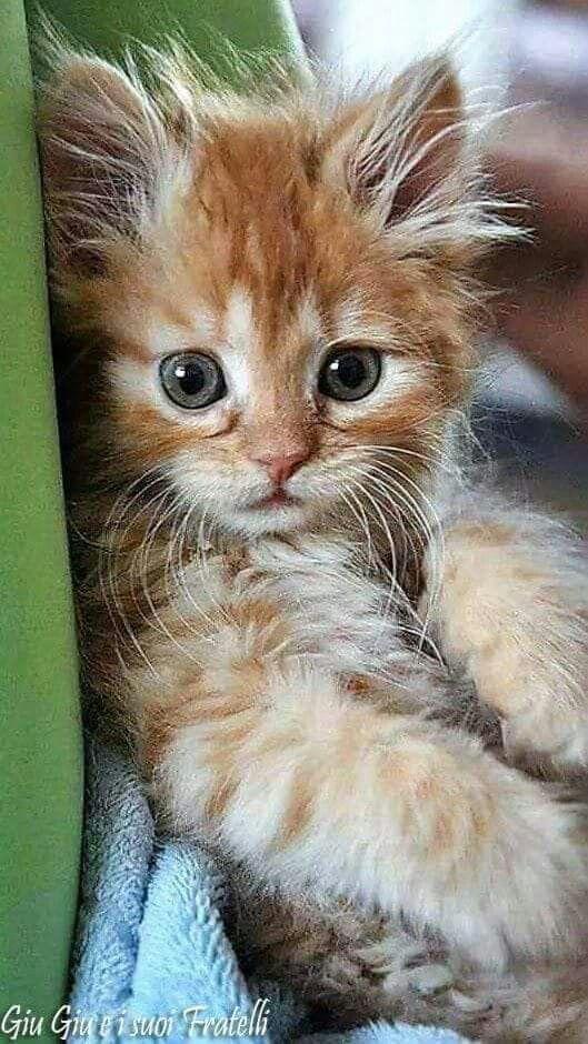 Omg Le Petit Roux Aux Yeux Bleus Y é Tellement Cute