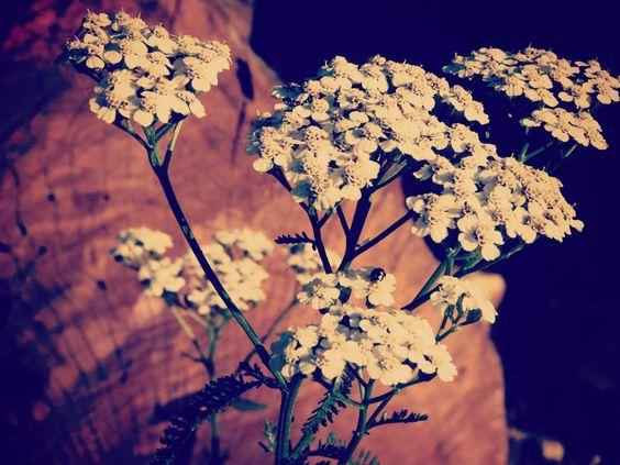 Uckermark_Pflanzen.jpg 1.250×938 pixels