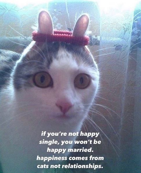 Another Purrfectly Blessed Caturday 22 Cat Memes In 2021 Cat Memes Cats Funny Cat Memes