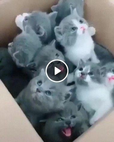 Comprei uma caixa cheio de gatinhos
