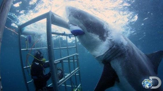 areal photos of sharks along coastlines | Great White Shark Tracker: Sharks Return To Beaches, 'Much More ...