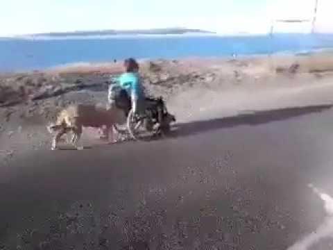 مشهد مبكي شاهد وفاء الكلاب لصاحبها في زمن الخيانة Youtube Real Love