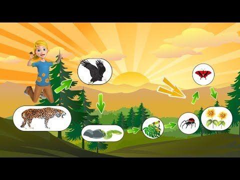 9 تمرين حساب الكتلة الحية المتنقلة في سلسلة غذائية Youtube Character Fictional Characters Family Guy