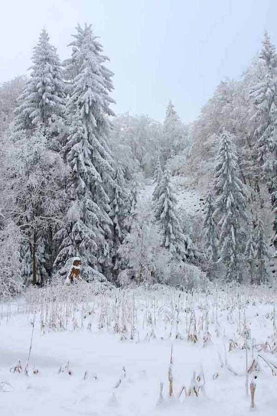 rhodocallis2007: Winter am Hohen Meissner