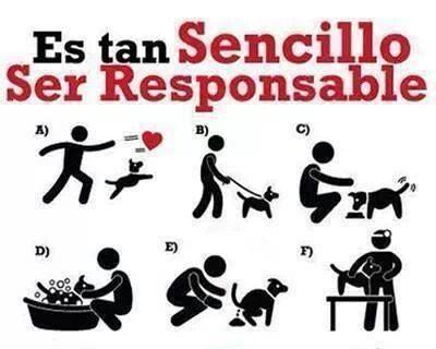 responsabilidad con los animales
