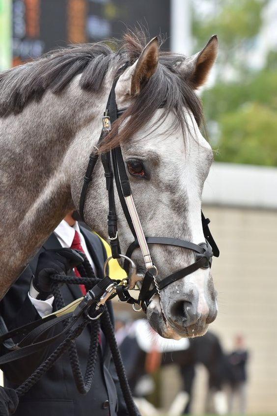 ラニ(牡2)新馬戦パドック