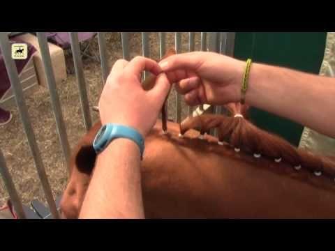 Cómo trenzar a un caballo de doma clásica con moñitos. - YouTube
