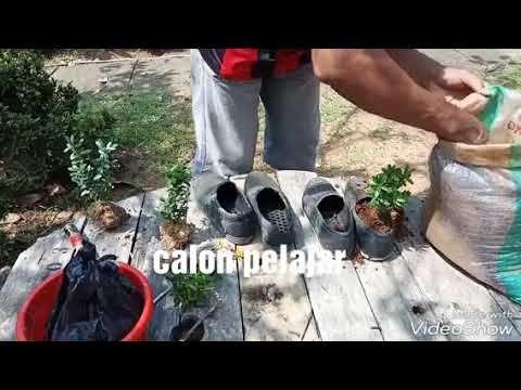Sepatu Bekas Bisa Di Kan Pot Kembang Sepatu Ide Bagus Dan Ide