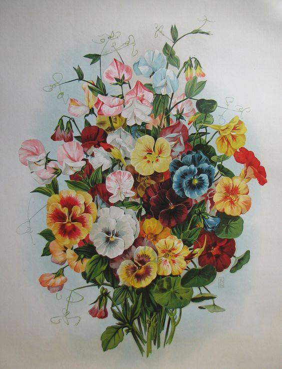 1900 Antique Victorian Pansy Flower Parlor Print Vintage Poster: