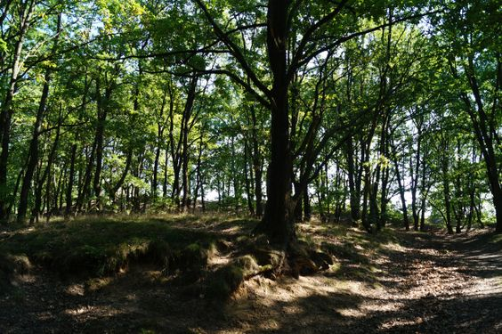 Wald Ausflug