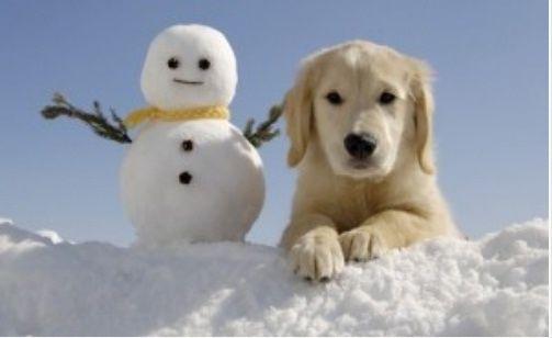 Bildergebnis für snowman with pet