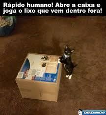 brinquedos para gatos - Pesquisa Google