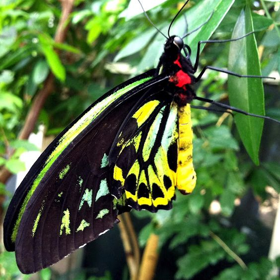Butterfly Pavilion, Denver, Colorado, 2012