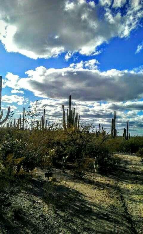 Tanque Verde Ranch.