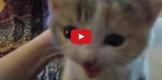 Who Could Resist This Cute Kitten? Not Me!! Have you had your kitten fix today?