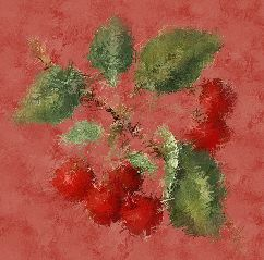Süße Kirschen Red Fruit