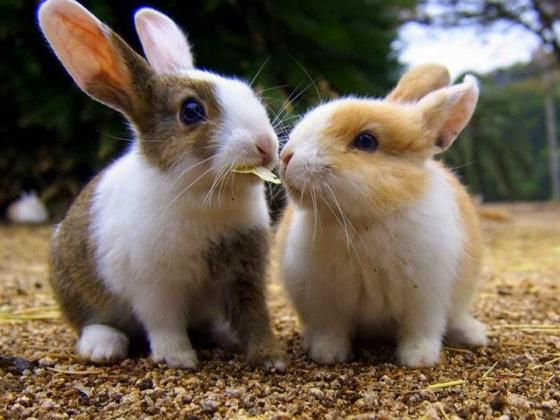 """Cute Overload on Twitter: """"Sharing with a friend on Bunday morning. http://t.co/ZnURsLCY0L"""""""