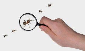 مكافحة النمل الابيض بالاحساء 0503276813 تقضي نهائيا على النمل الابيض باستخدام افضل المبيدات المخصصة للقضاء علي النمل الابيض ثقة العملاء بنا قوية ف Glass Glasses