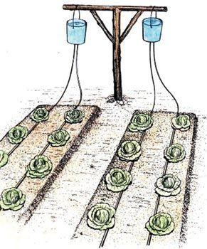 DIY Home Irrigation System | DIY Bucket Drip Irrigation?