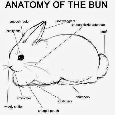 Bunny Fun - Lessons - Tes TeachTes