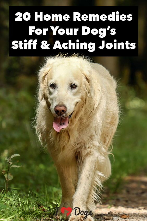 Picture Of A Dog Smoking A Joint