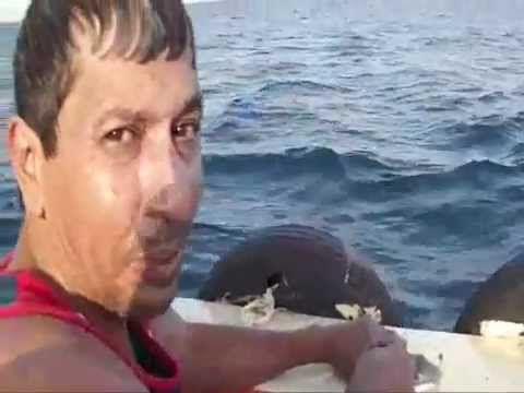 طريقة تنظيف سمك القراض المسمم في السويس Suez City Egypt
