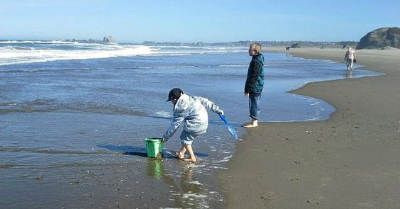 I love beach combing, well, mostly I like watching my children do it... But, I will tell you this, it has taught me a lot about building an income generating blog, and here is how...