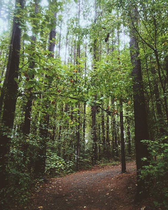 22 hiking trails within 90 minutes of Charlotte