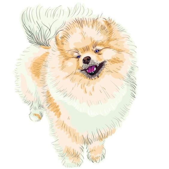 Sharp Pomeranians In 2020 Dog Vector Spitz Dogs Smiling Dogs