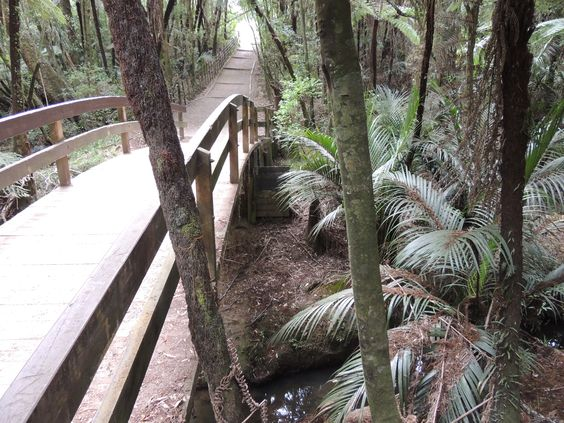 Totara Park -- Manurewa -- Auckland -- New Zealand -- 20th February 2014